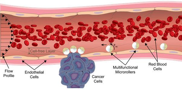 Blood Cells Diagram