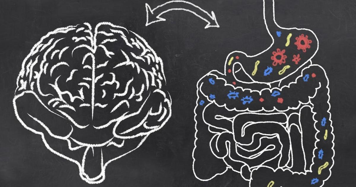Oxford study explores links between personality and the gut microbiome