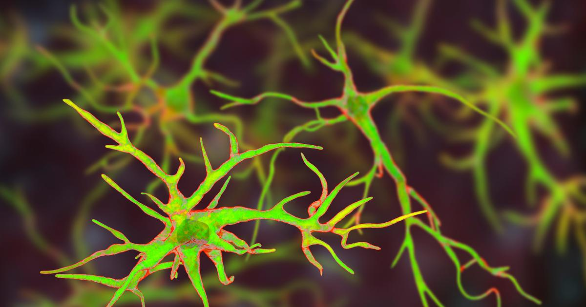 Anti-inflammatory brain cells activated by signals from gut bacteria