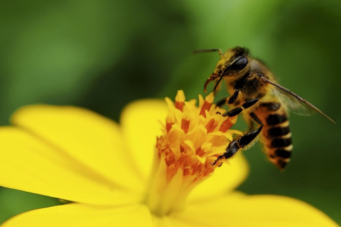 Bees have three extra eyes on top of their head holding color receptors that help them accurately identify color across a variety of light conditions