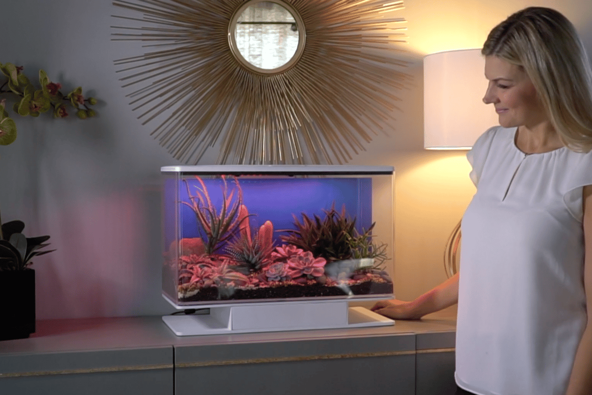 The SmartTerra is an app-controlled terrarium loaded with lights, speakers and a water system thatcan simulate sunsets,rainstorms and other sound and light shows