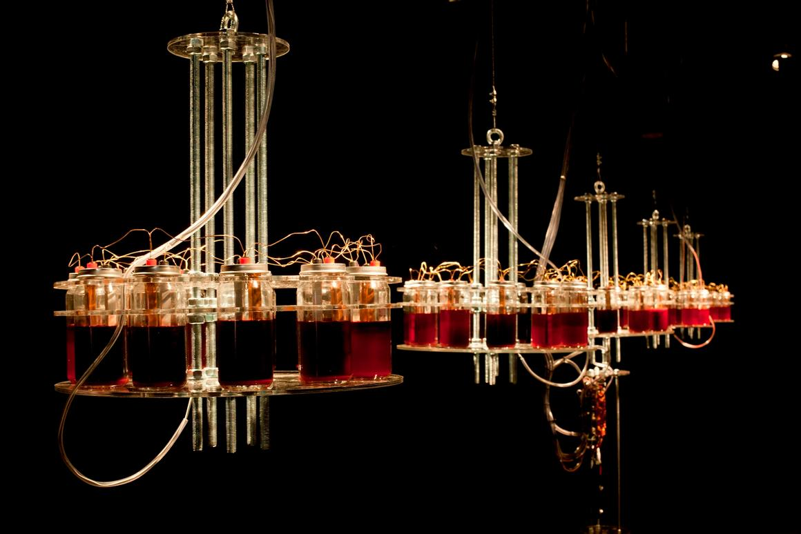 Five blood batteries power a central synth in the Until I Die music/art installation