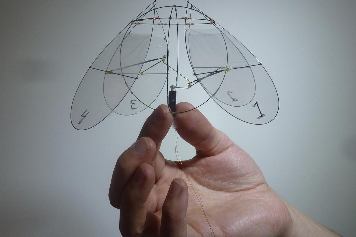 New York University's flying jellyfish (Photo: Leif Ristroph)