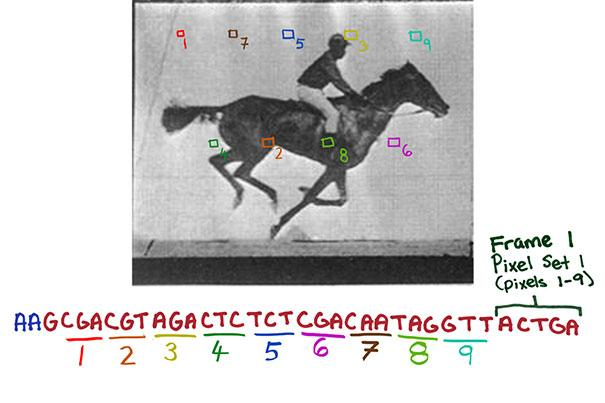Individual pixels of each image were translated into snippets of DNA code, as well as the order in which each frame should appear, which allowed the digital data to be stored in the genome of living bacteria