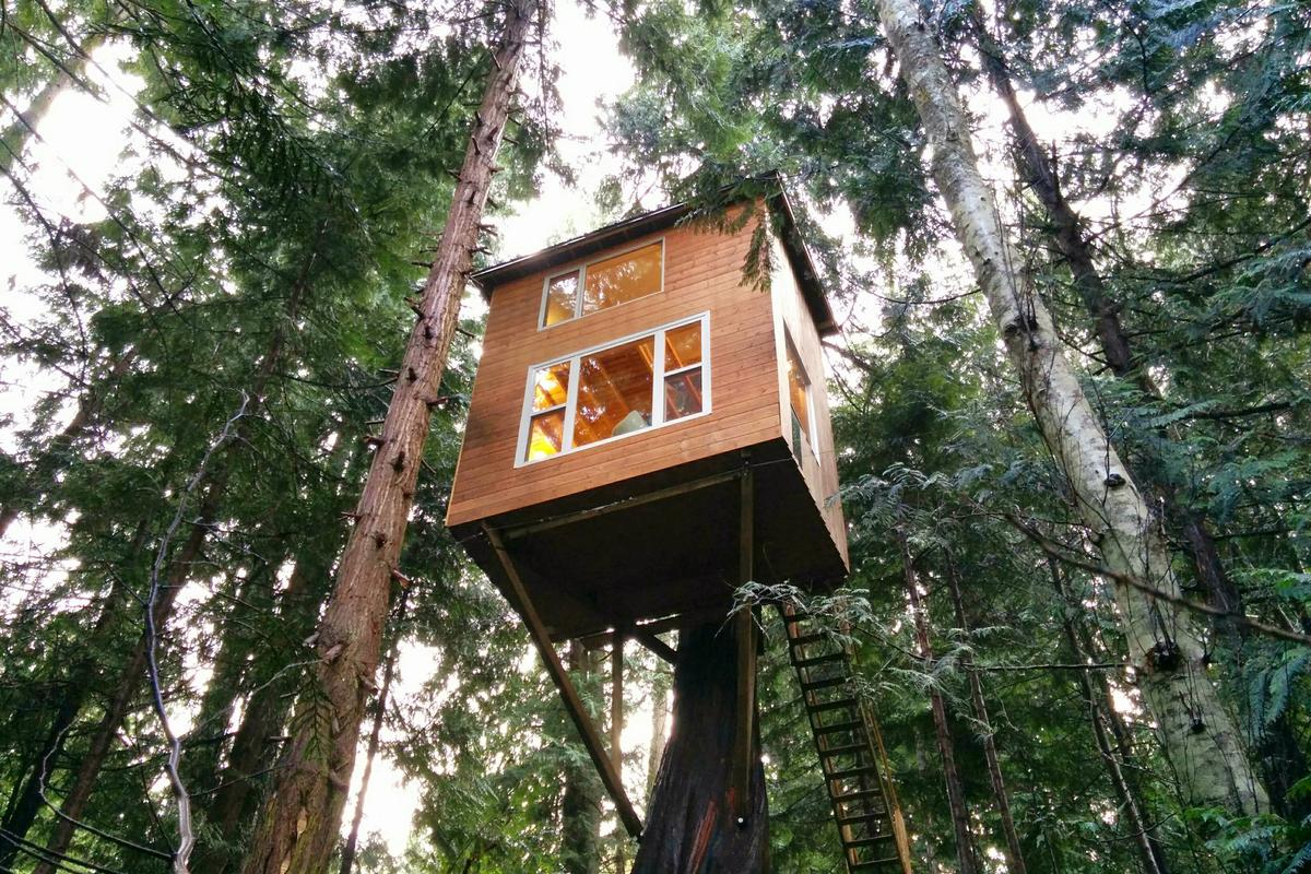 The Raven Loft is perched some 5.1 m (17 ft) off the ground in British Columbia (Photo: Geoff de Ruiter)