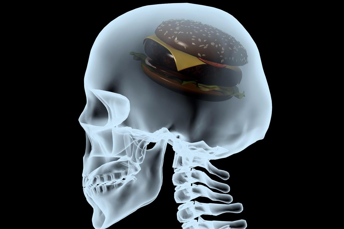 A new study may have uncovered amechanism that explains how our brains direct our bodies to stop burning fat and adjust to a lowered caloric intake.