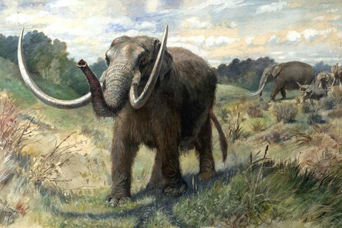 Artist depiction of an American mastodon