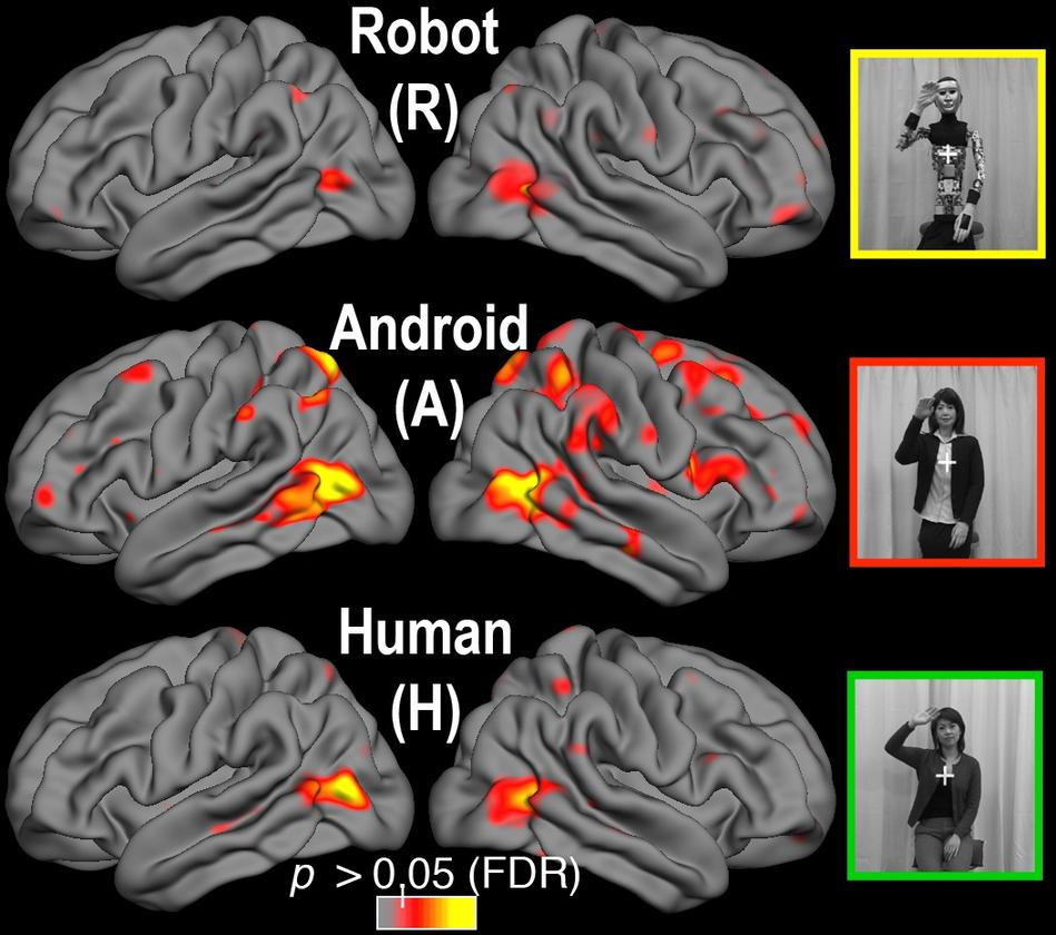 The brain's different responses, when viewing the stripped android (top), the human model, or the lifelike android (Image: Ayse Pinar Saygin, UC San Diego)