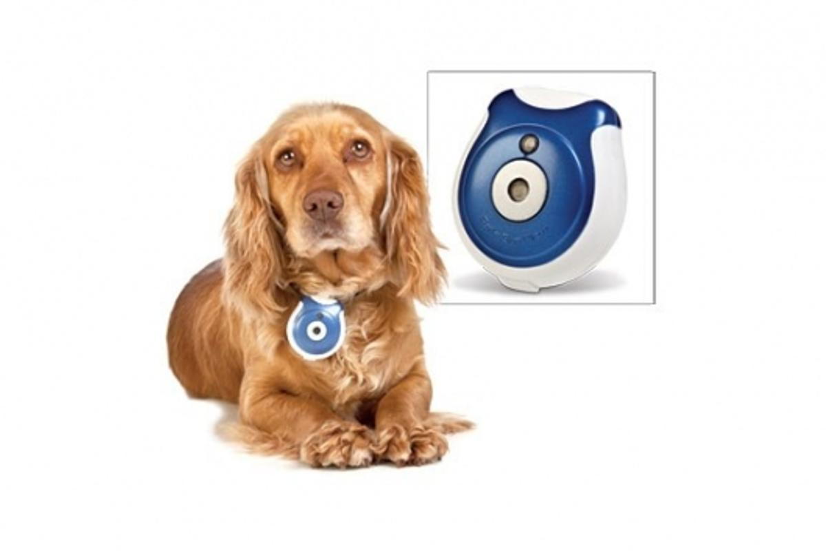 Pet's Eye View Camera keeps a record of all the mischief your pet gets up to when you're not home
