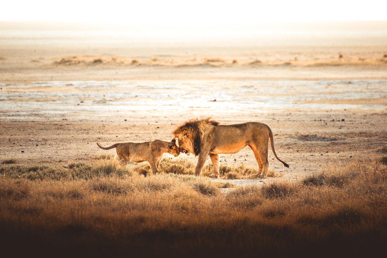 'A Family Moment', Etosha Park, Namibia