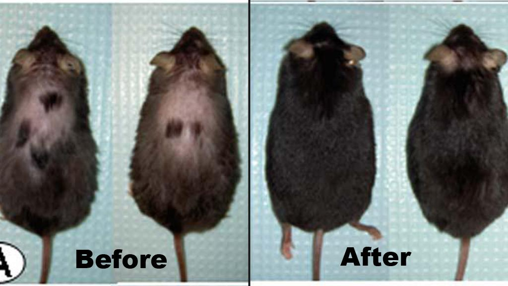 The mice before and after injections with astressin-B