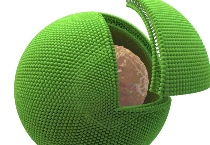 An artist's impression of a biological cell (brown) encased in an artificial cell (green)