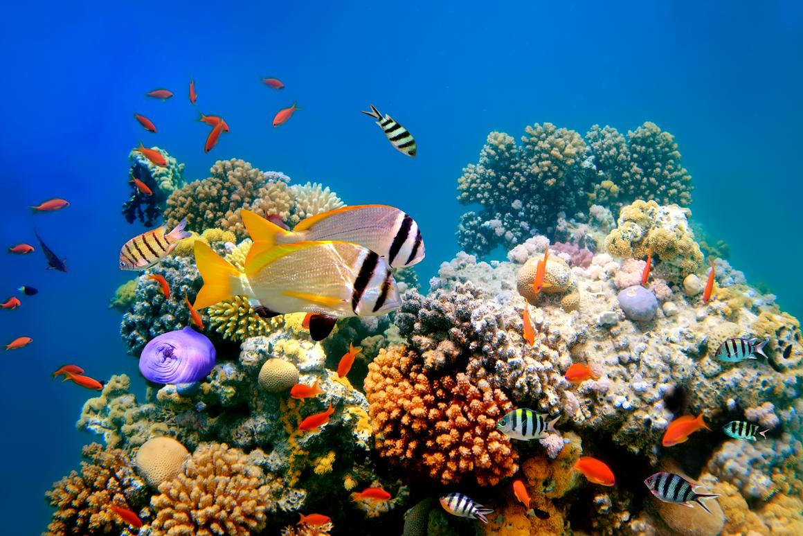 The presence of fish on a degraded reef can help to restore it