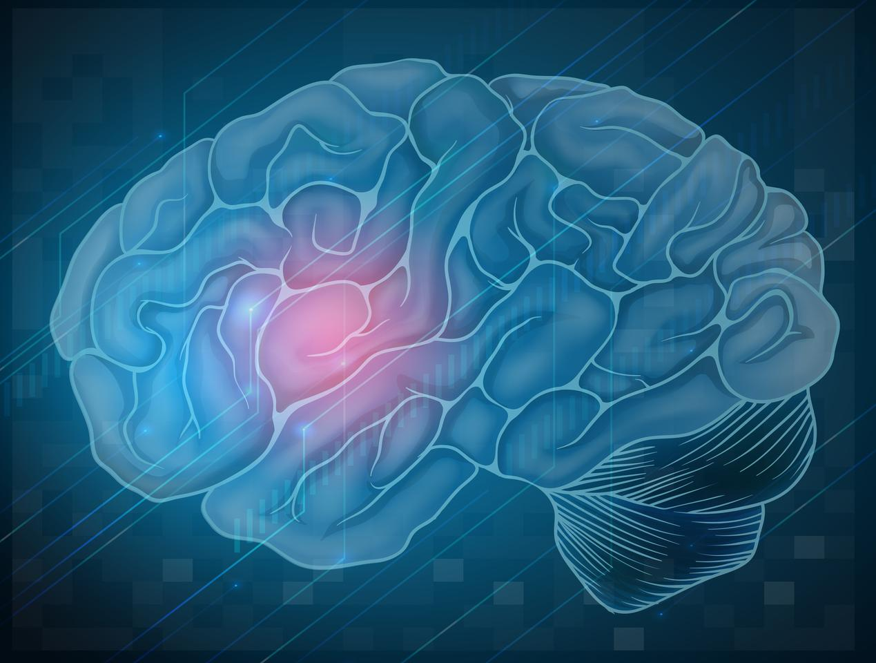Scientists have identified an enzyme in the brain that may protect against damage caused by low oxygen levels