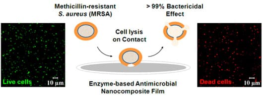 The Enzyme-based antimicrobial nanocomposite film (Image: Rensselaer/Ravindra C.Pangule)