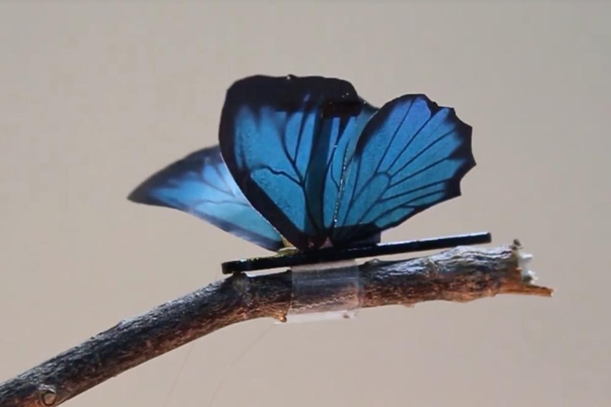 A robotic butterfly, the wings of which are moved by the artificial muscles