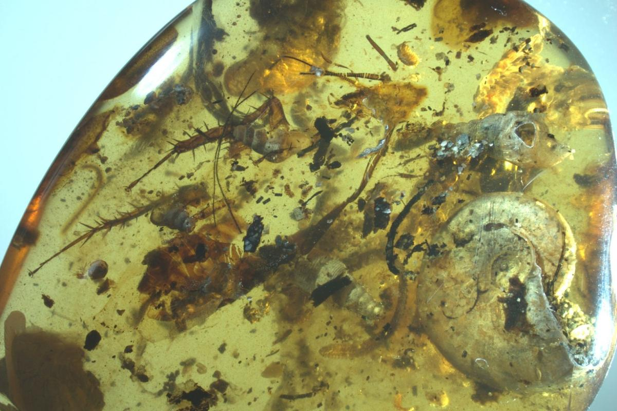 Researchers have discovered a piece of amber containing a strange mix of land-dwelling insects and sea creatures