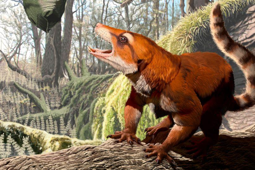 An artist's rendition of Cifelliodon wahkarmoosuch, a transitional creature between reptiles and mammals that may readjust our understanding of when the supercontinent Pangaea broke apart