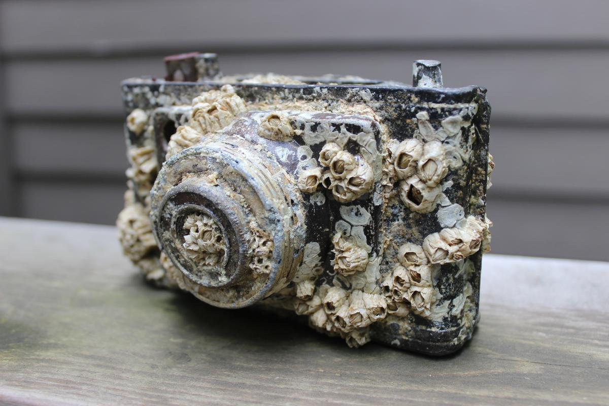A barnacle-encrusted camera found by Gizmag writer Ben Coxworth