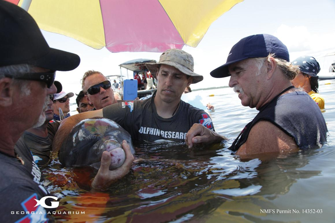 Researchers examine a dolphin during the superbug tests