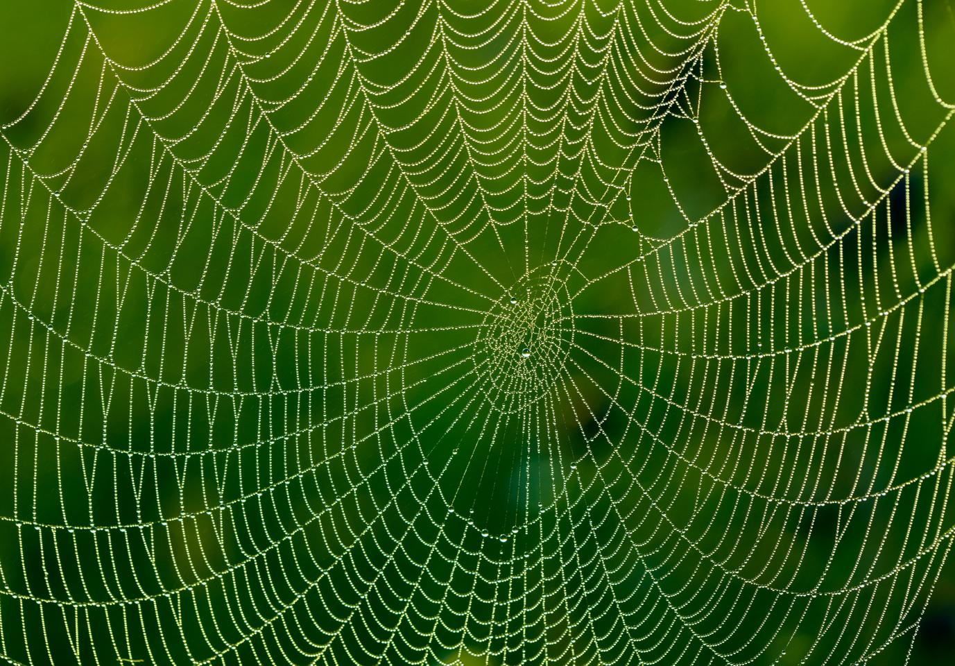 When spiders are given water laced with graphene or carbon nanotubes, the material gets passed into their silk