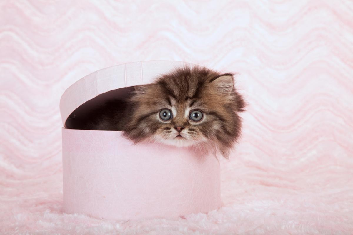Qubits are fickle things, having a tendency to lose superposition under observation - recall Schrödinger and his unfortunate cat (Photo: Linn Currie/Shutterstock)