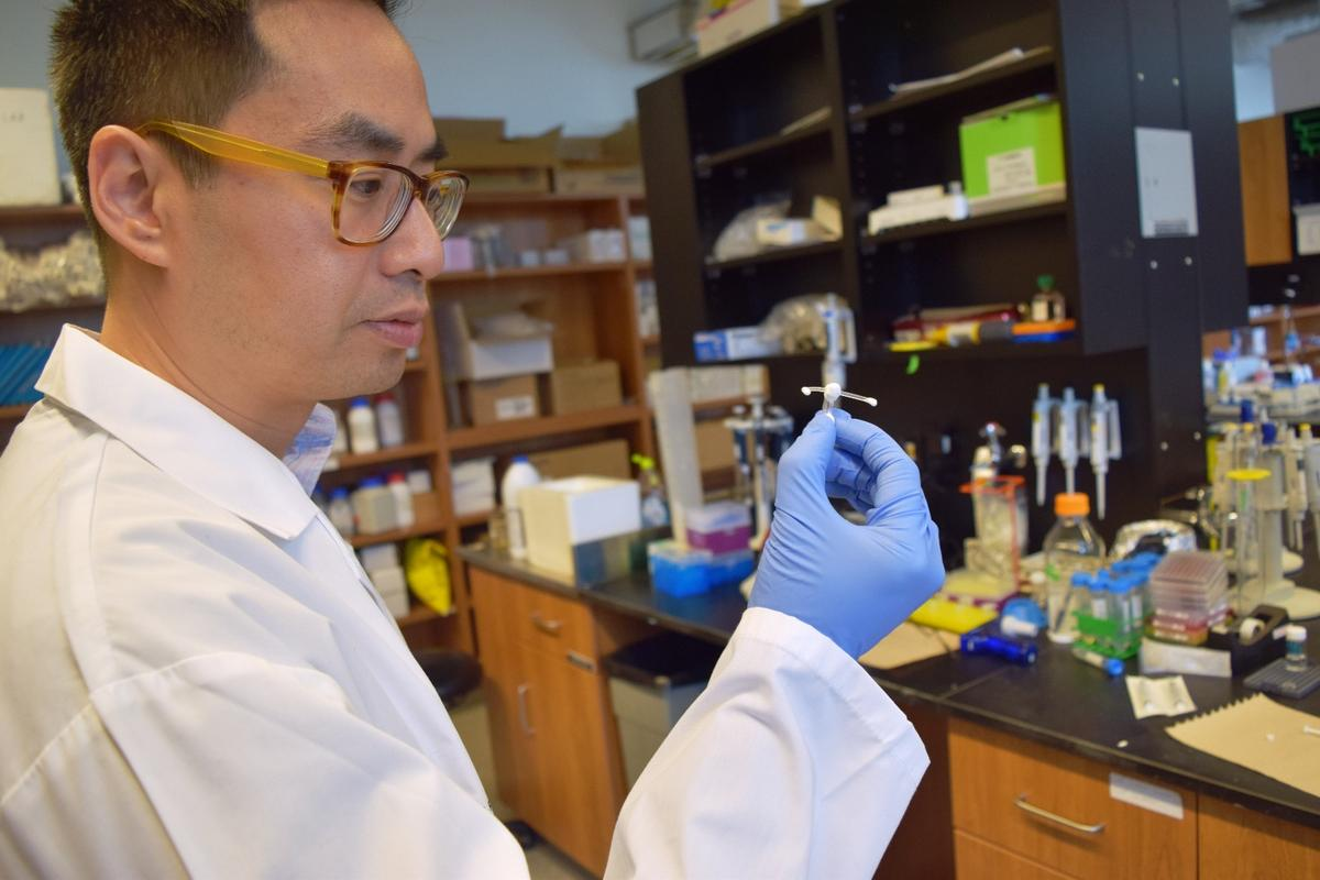 Emmanuel Ho, a professor in the School of Pharmacy at Waterloo, with an anti-HIV implant developed by him and his colleagues