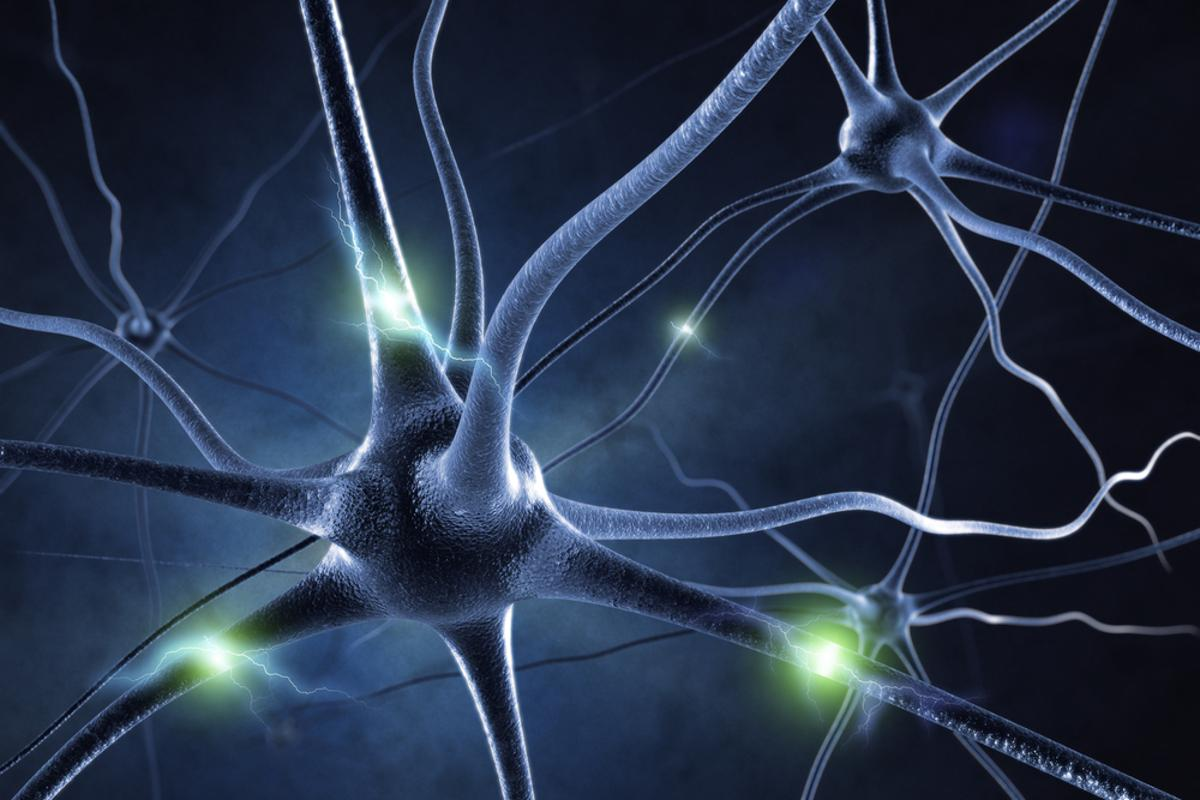 Researchers at the University of Texas are exploring the possibility of electrically stimulating the visual cortex of the brain to create simple images and shapes (Image: Shutterstock)