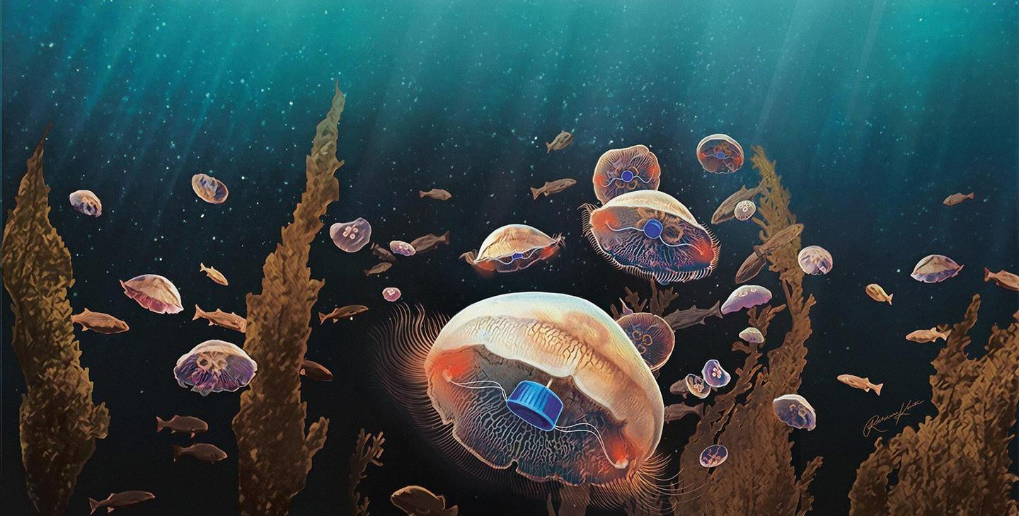 Scientists hope to one day use bionic jellyfish as a vast network of cheap environmental monitors