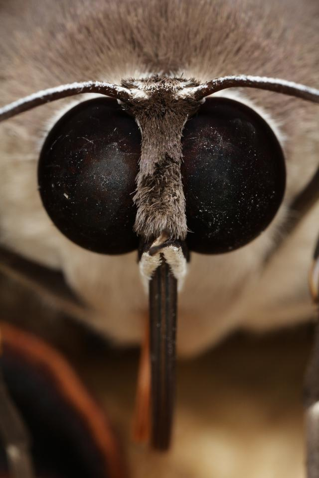 Inspired by moths' eyes, scientists have created new technology that may help improve the efficiency of thin-film solar cells (Photo: Shutterstock)