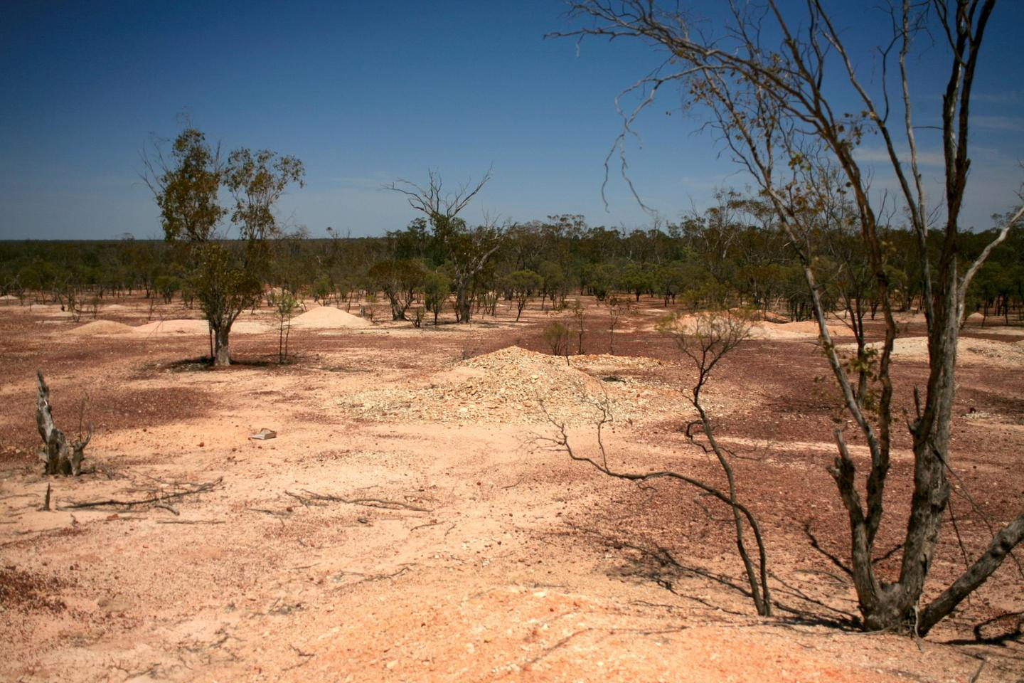 The area around Lightning Ridge opal fields, where the opalized fossils of Fostoriawere found