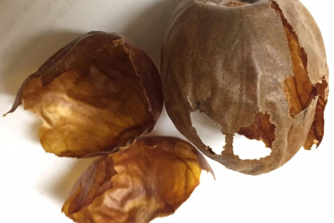 The team will begin investigating how the natural compounds in avocado seed husks could lead to better medications