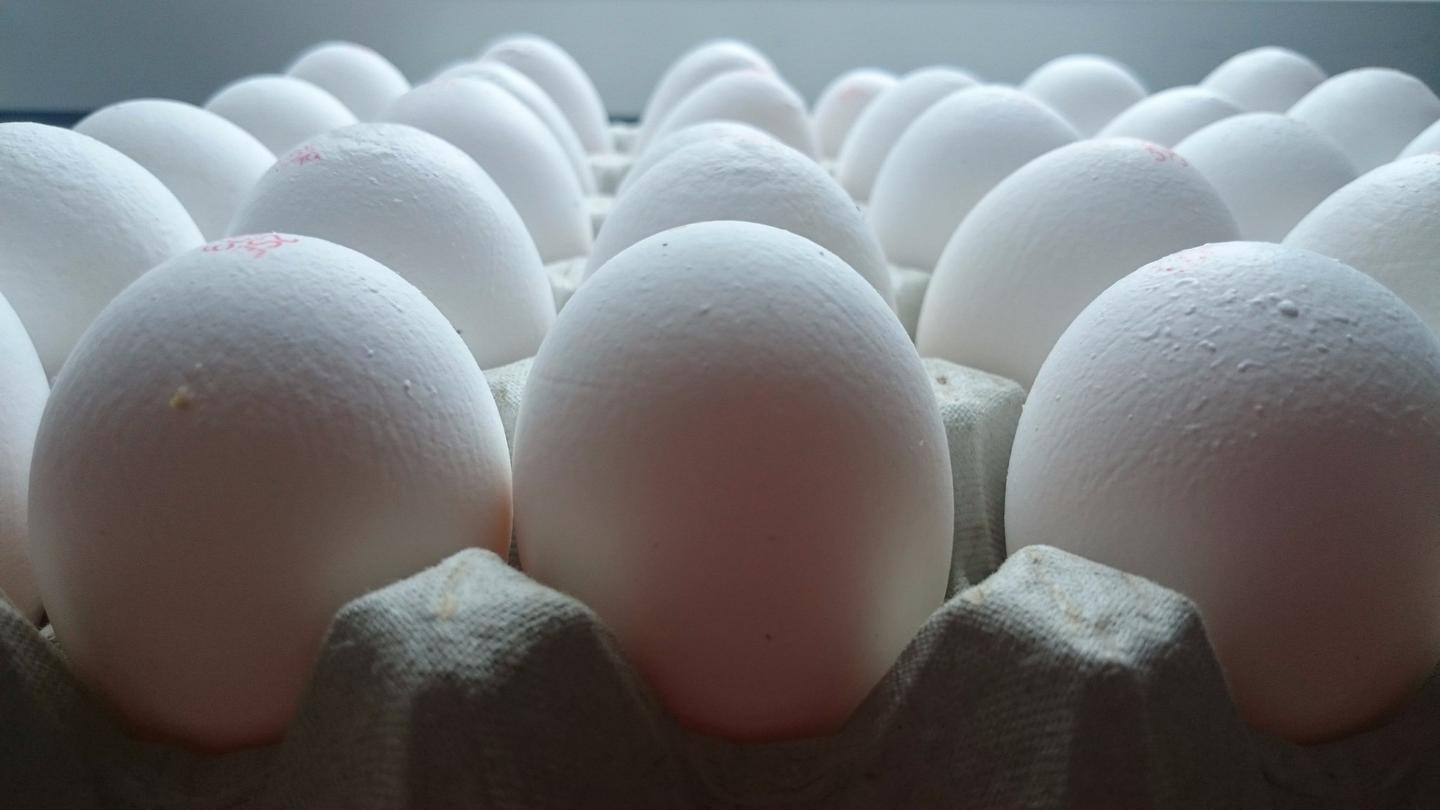 Eggshell nanoparticles have helped create a bioplastic more suited to packaging