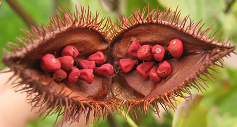 Scientists have discovered that a compound found in natural food additive annatto could play a role in tackling skin cancer
