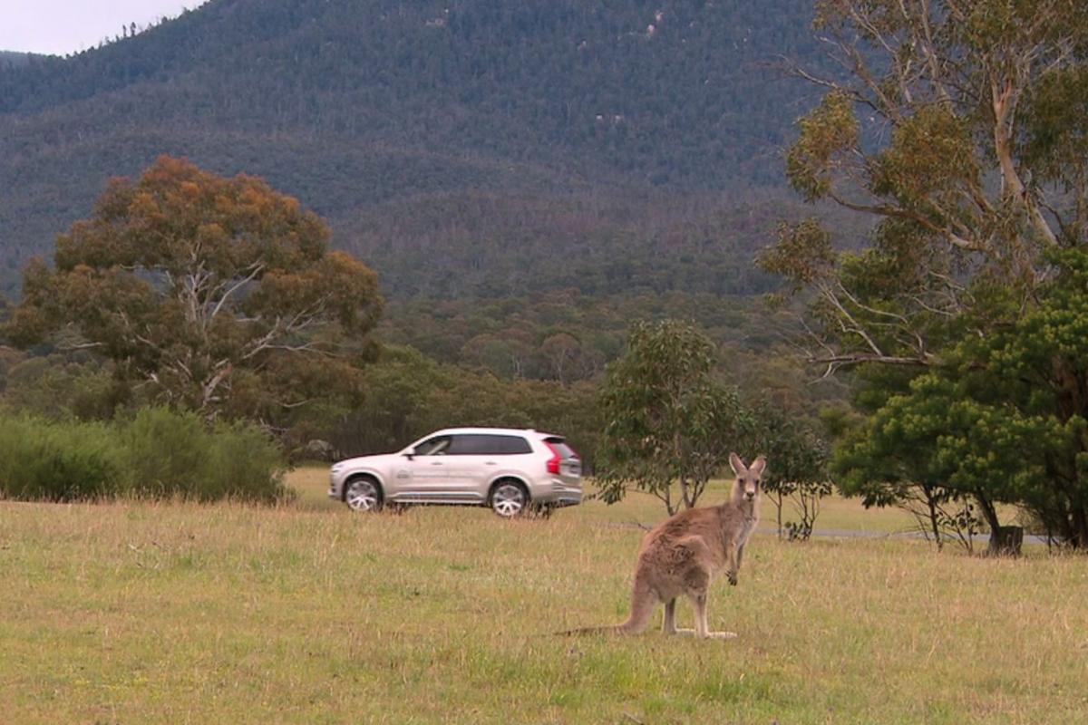 Kangaroos are a serious hazard on Australian roads, and Volvo is looking to use technology to avoid the marsupial colliding with its vehicles