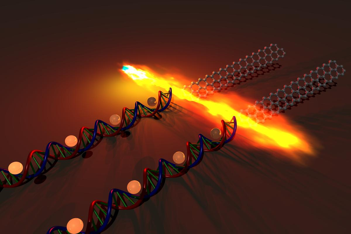 Stanford scientists have used DNA molecules to assemble high-performance graphene transistors (Image: Anatoliy Sokolov/Bao Group/Stanford Engineering)