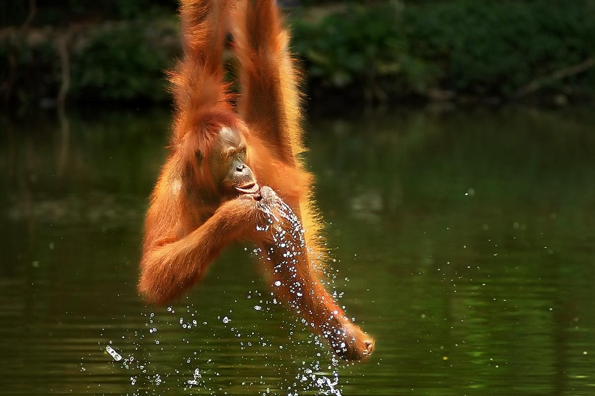 Overall Winner, 'Need to drink', Jurug Park, Indonesia