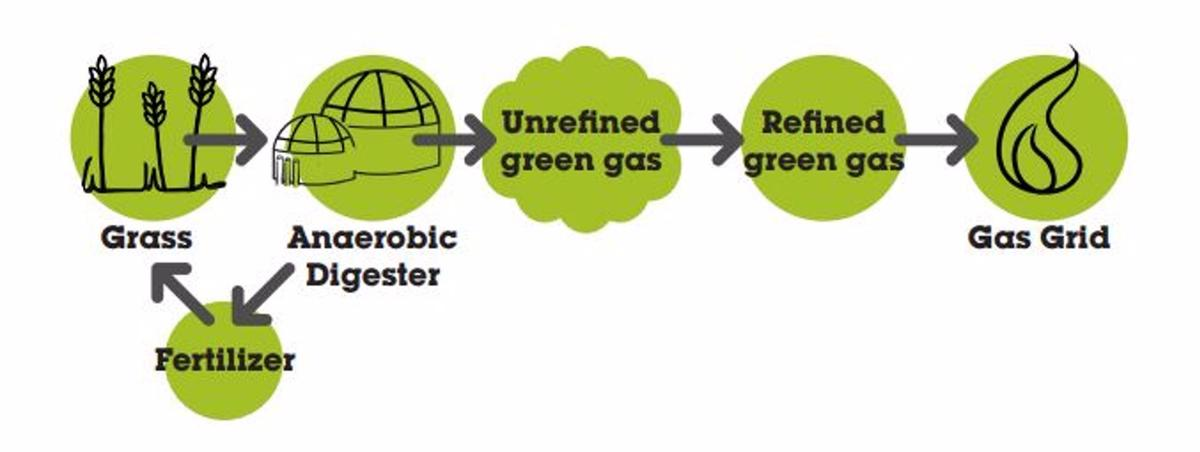 Flow chart showing how to turn grass into gas