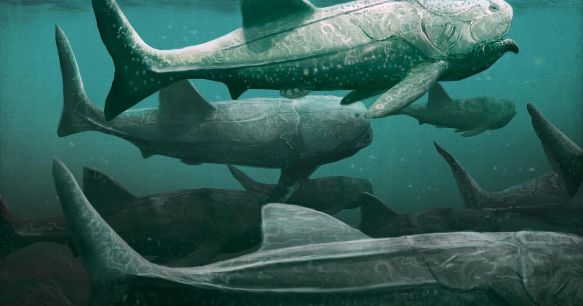 Giant armored prehistoric fish may have fed on plankton