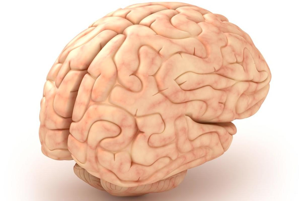 Scientists have used polymer implants to grow new adult brain tissue (Image: Shutterstock)