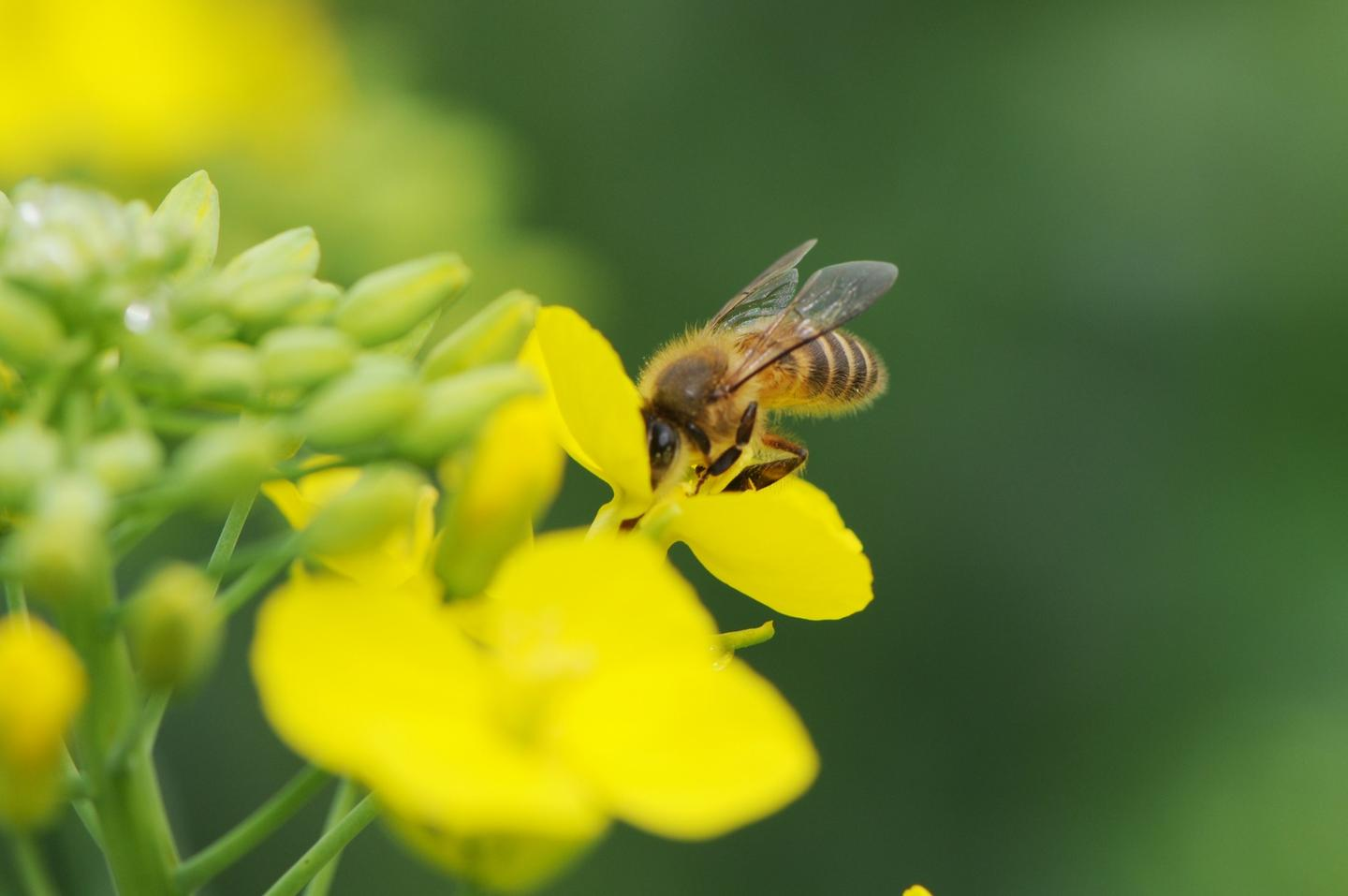 EU member states have voted in favor of a complete ban on the outdoor use of three insecticides known to be harmful to bees