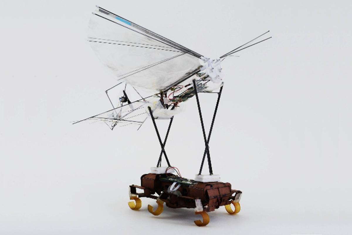 The VelociRoACH carrying a H2Bird before take off