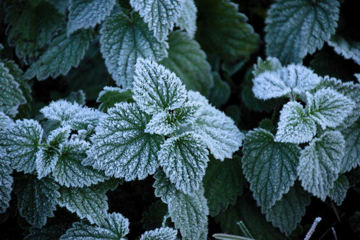 The patterns of frost formation on leaves has inspired a new type of ice-repellent coating