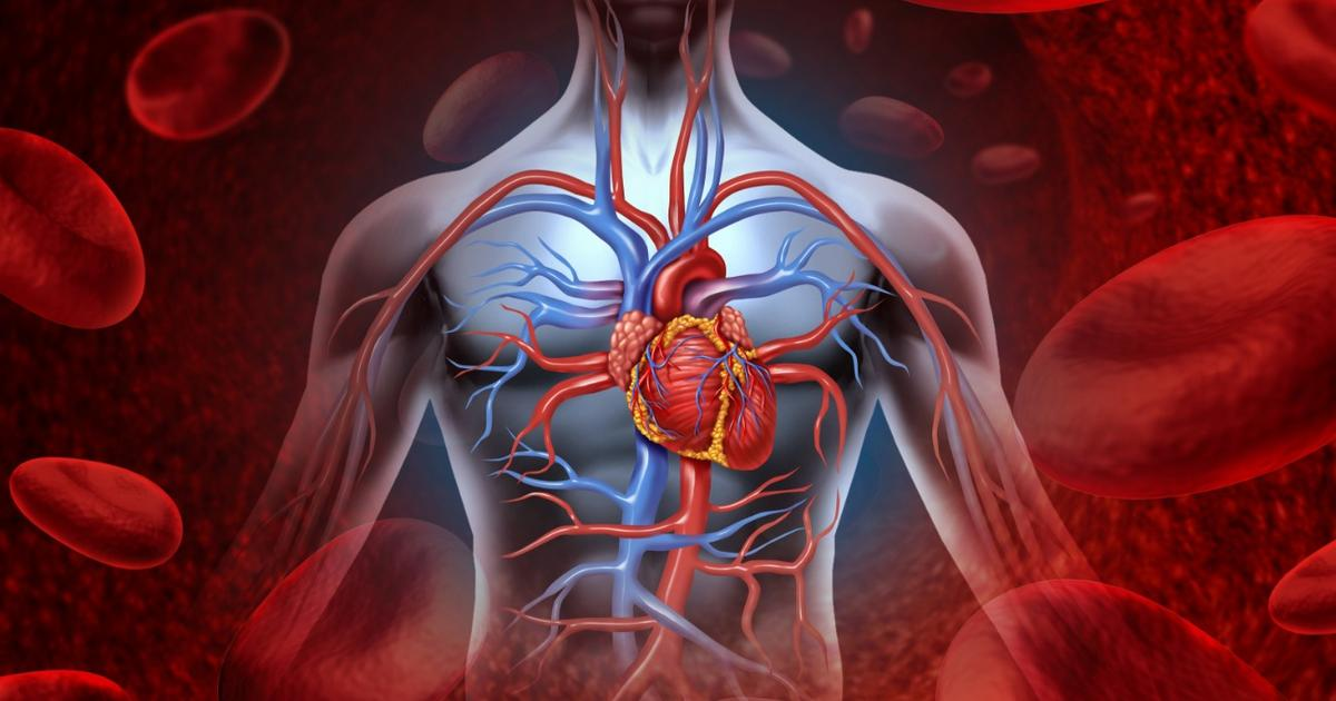 Molecule produced during fasting has anti-aging effect on vascular system