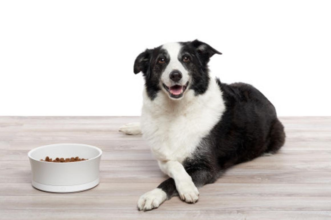 The ProBowl connects to a wireless home network and allows owners to monitor a pet's feeding habits using a companion app