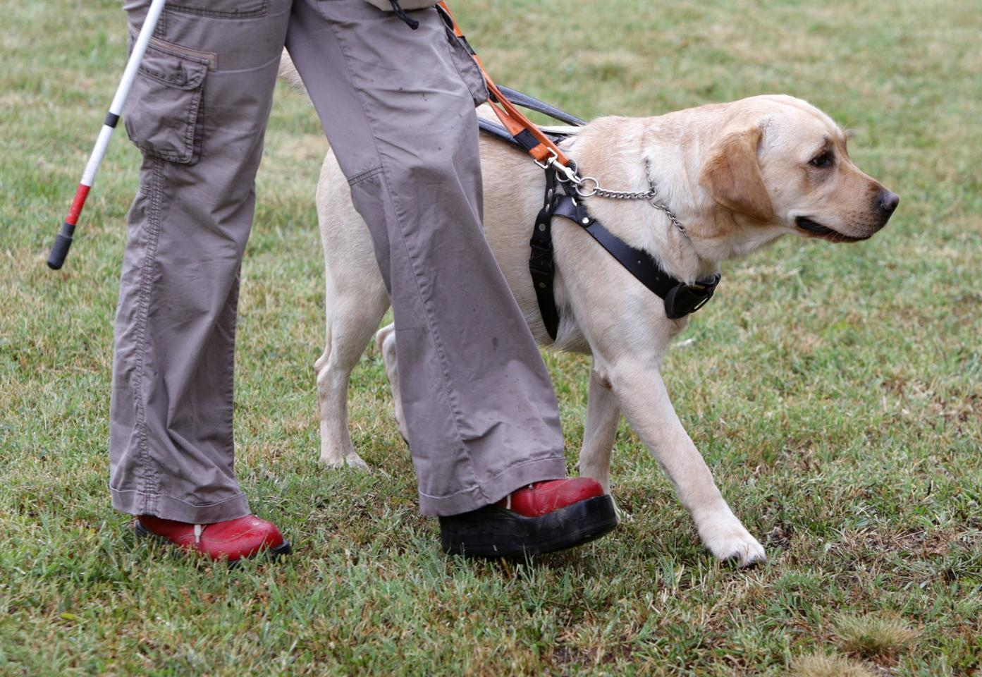 The study looked at dogs trained to assist the disabled, and at ones trained to detect explosives