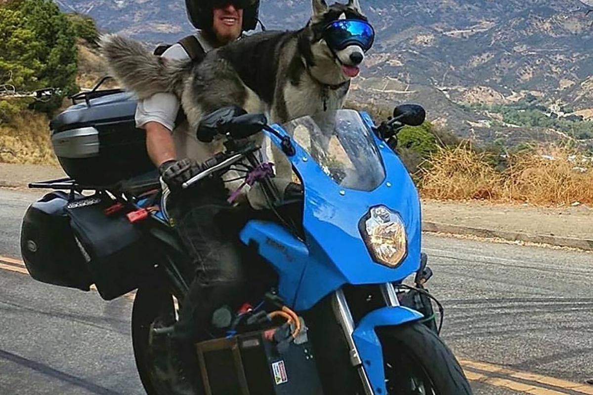 Terry and Charger on the road, with Charger's badass doggles