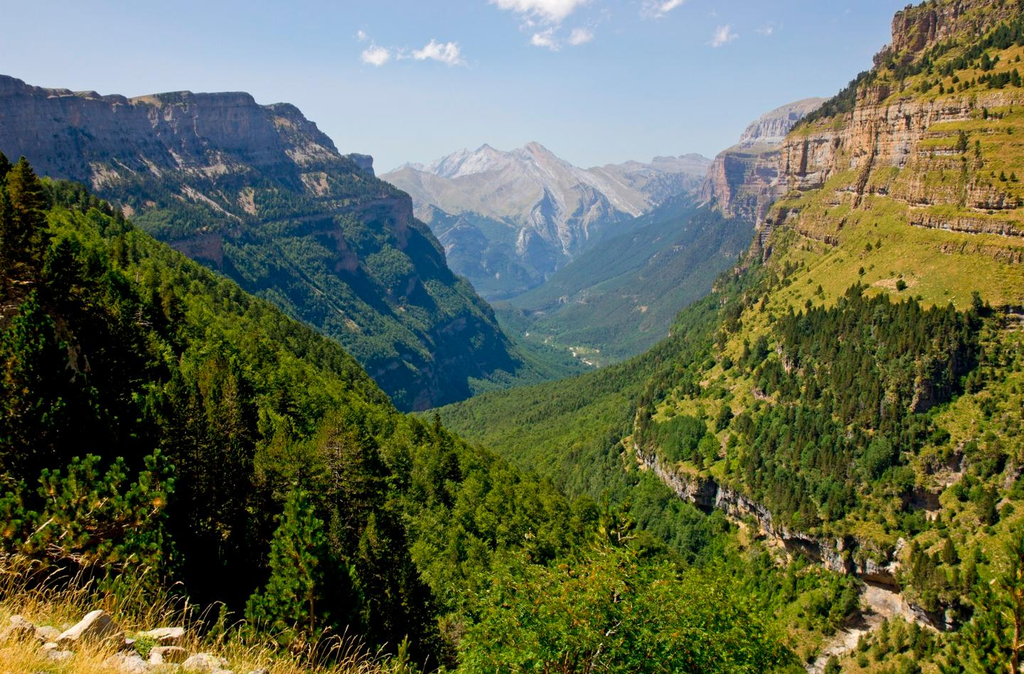 Researchers examined samples taken from trees in the Spanish Pyrenees and found that faster-growing trees tend to die younger than those that grew slower
