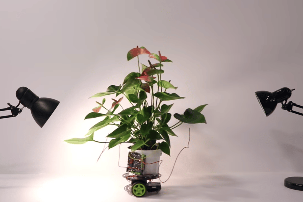 MIT Media Lab has created Elowan, a cyborg plant that can drive itself towards light sources