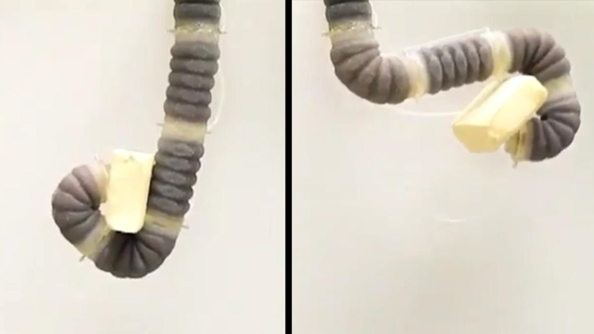 With multiple jamming segments and four control cables, the robotic arm can flex and grip like an elephant's trunk